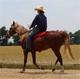 sorrel foxtrotter mare with flaxen mane & tail for sale