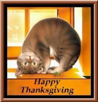Thanksgiving Cat