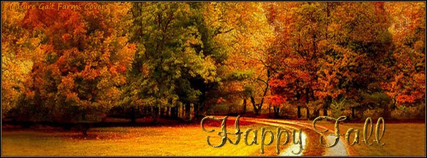 Fall Forest Facebook Cover - Images of Fall Leaves Photos ...